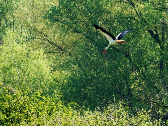 Stork in