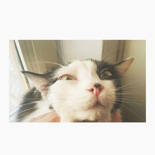 Lol 😂 Lol :) Lol ^.^ LOL! HAAHHAHAAHAHAH Sweety  Cat♡ Domestic Animals Animal Themes Feline Pets Cats 🐱 catstar #cat #catnap #catoftheday #catpic #catlovers #catsconnect #catinstagram #catsofinstagram #gato #gatinhos #gatto #garfield #petstagram #premierpet #photooftheday #petsofinstagram #picoftheday #petlovers #instabicho #ilovecats ilovemypet issovici Cats Lovers