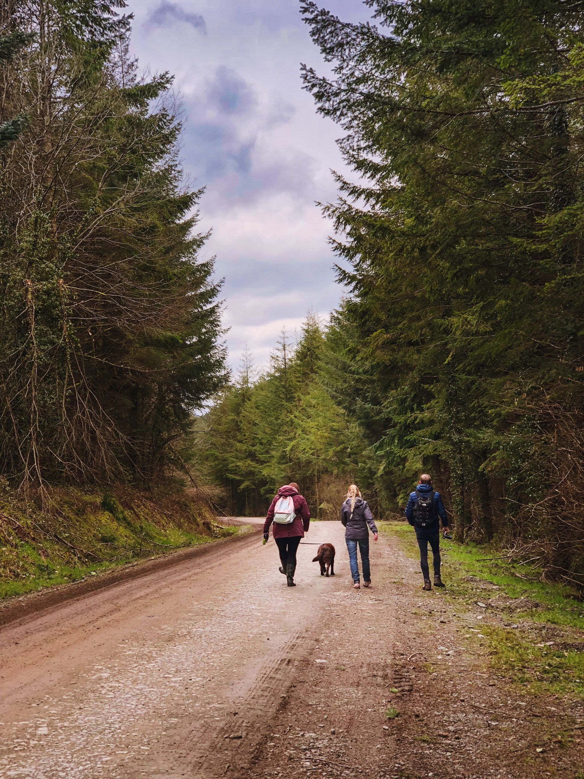tree, plant, walking, rear view, group of people, full length, real people, women, direction, leisure activity, the way forward, nature, sky, men, lifestyles, transportation, road, cloud - sky, adult, day, outdoors