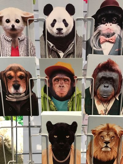 Hello World Check This Out Shopping ♡ Utrecht Funny Animals Cards 😚 IPhoneography IPhone 7 Plus Wich Is The Best One? I Love The Monkey