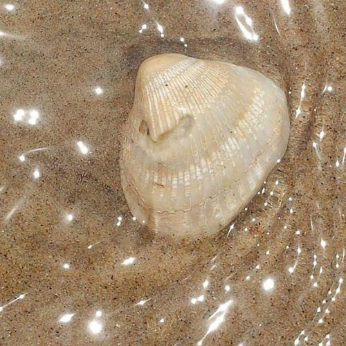 Close-up Seashell In Water