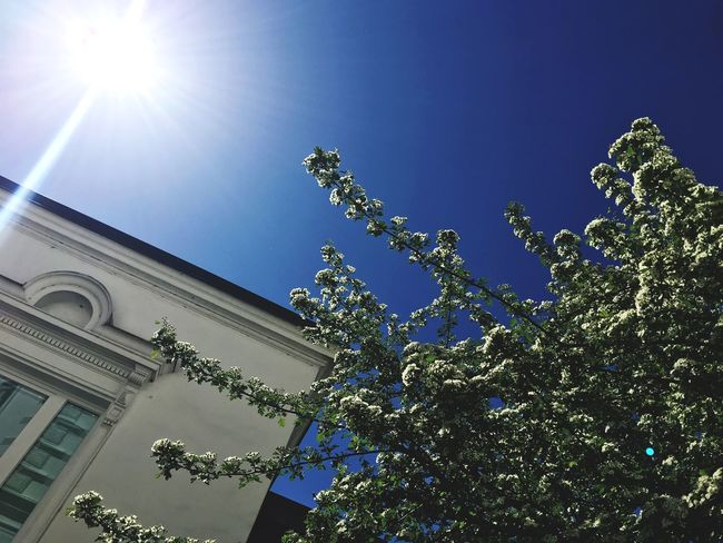 Historical Building Sky Low Angle View Tree Architecture Built Structure Plant Building Exterior Nature Sun Sunlight Blue No People Lens Flare Clear Sky Building Outdoors