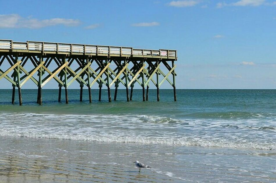 Seagull in the Surf Pjpink Beach Atlantic Ocean North Carolina Wrightsville Beach Winter Seagull Pier