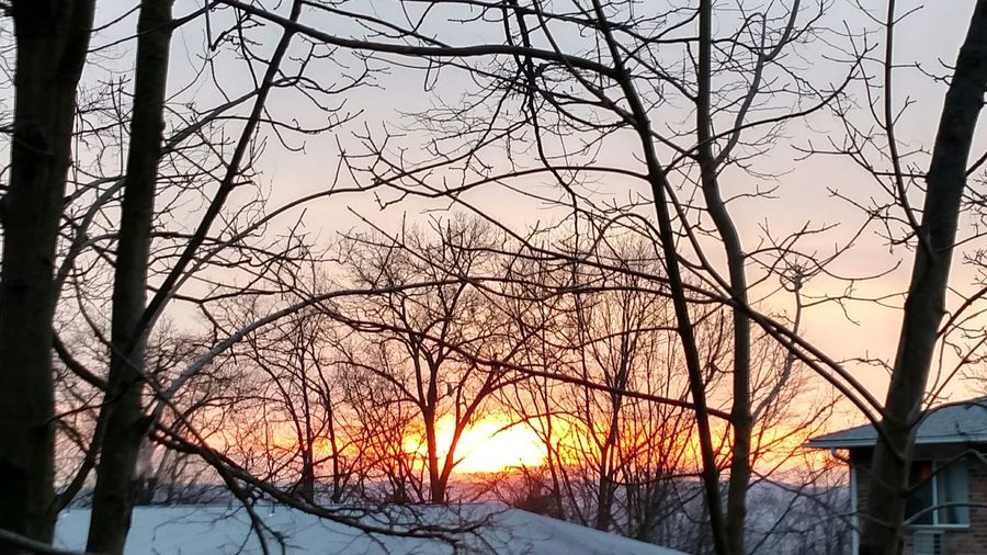 Bare trees on snow covered landscape at sunset
