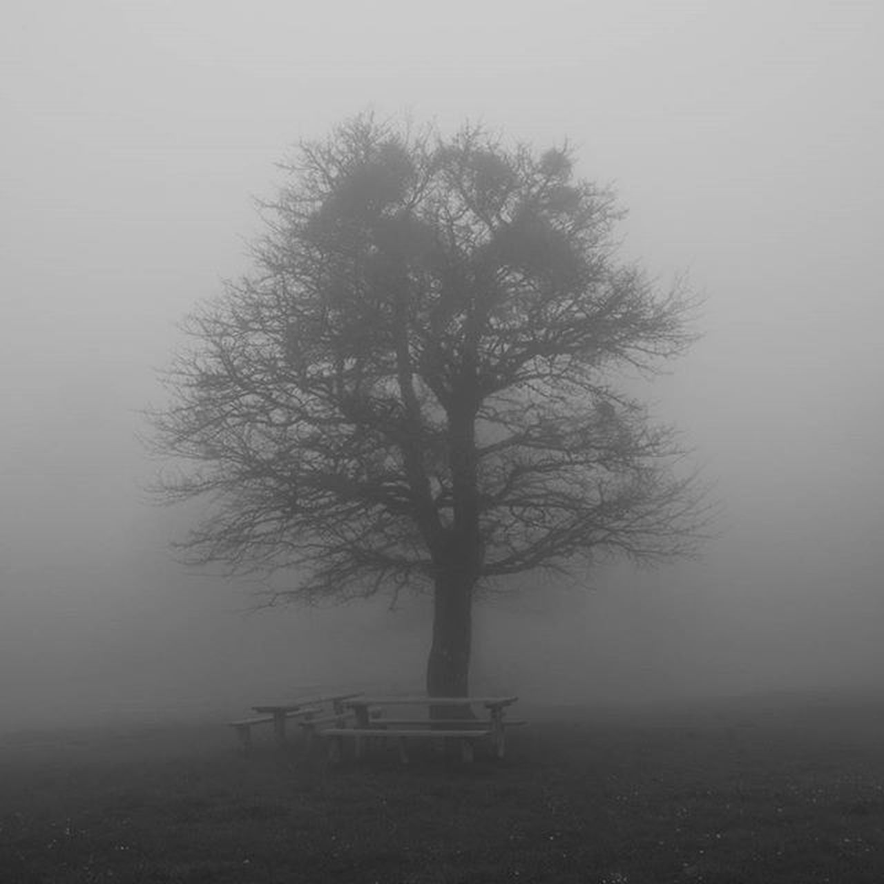 tree, landscape, fog, isolated, tranquility, lone, solitude, bare tree, tranquil scene, tree trunk, nature, branch, beauty in nature, outdoors, no people, hazy, day, sky