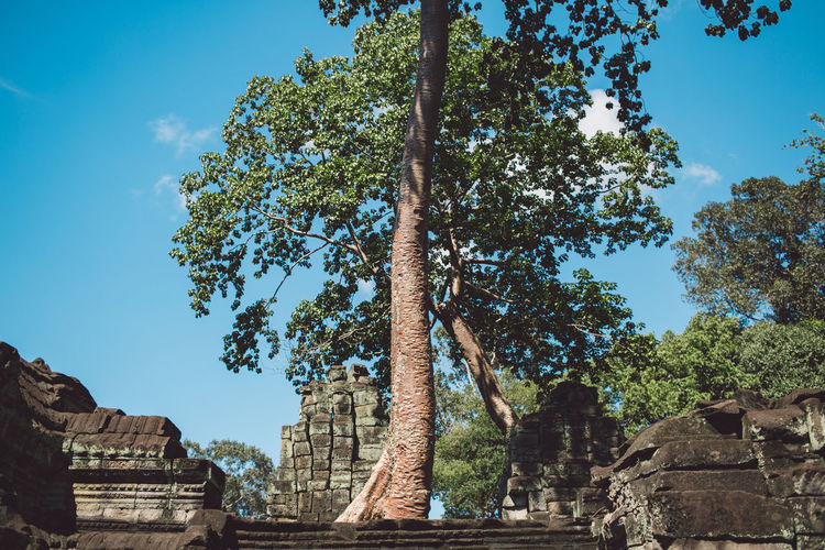 Siem Reap Cambodia Angkor Tree Built Structure Plant Architecture History Sky The Past Nature Ancient Religion Travel Destinations Place Of Worship Belief Building Exterior Day Spirituality Travel Tourism Growth Old Ruin No People Ancient Civilization Outdoors Archaeology Ruined