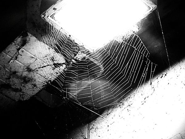 The perfect trap... Le piège parfait... Spider Web Spider Night Photography