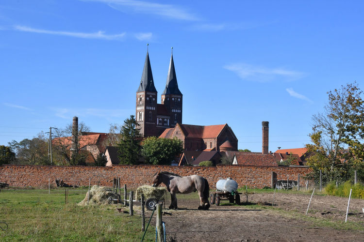View of a horse in a building