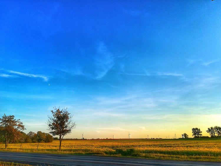 Zdjęcianiespodziewane Huawei Polska Niebo Niebieski Blue Sky Yellow Żółty Tree Water Rural Scene Sunset Blue Sky Landscape Cloud - Sky Horizon Over Water Cultivated Land My Best Travel Photo