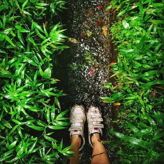 Standing Green Color Personal Perspective Human Leg Shoe Nature Leaf Plant Outdoors Mud Muddy Rainy Days Rain Greenery
