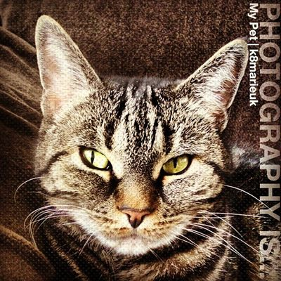Photooftheday InstaCC Instaccitsaboutmed3 Mypet Grumble Pets Petsofinstagram Cats Catlover Catsofig Catsofinstagram Petsofig TabbyCat Tabby Beautiful Browntabby Stripey K8marieuk Photo365 HDR Fluffy Love
