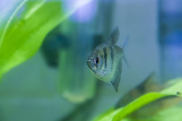 Animal Themes Close Up Fish Fish Bowl Nature No People One Animal Water