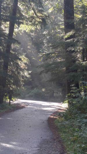 Forest Scenics