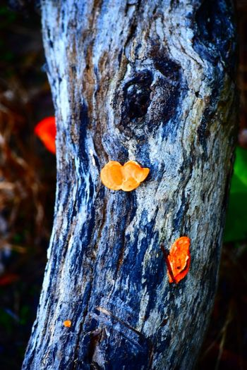 Bark Close-up Communication Creativity Day Focus On Foreground Heart Shape Love Nature No People Orange Color Outdoors Plant Plant Bark Rough Textured  Tree Tree Trunk Trunk Wood - Material