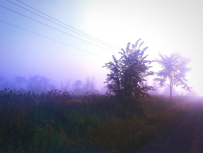Undercover... Treegasmic Tuesday Foggy Morning Morning Light Fall Beauty Power Lines EyeEm Nature Lover Rural Landscape Canada Coast To Coast Learn & Shoot: Single Light Source Deceptively Simple My Best Photo 2015 Pastel Power Landscapes With WhiteWall The Great Outdoors With Adobe The Great Outdoors - 2016 EyeEm Awards My Favorite Photo Fine Art Photography Colour Of Life See The Light