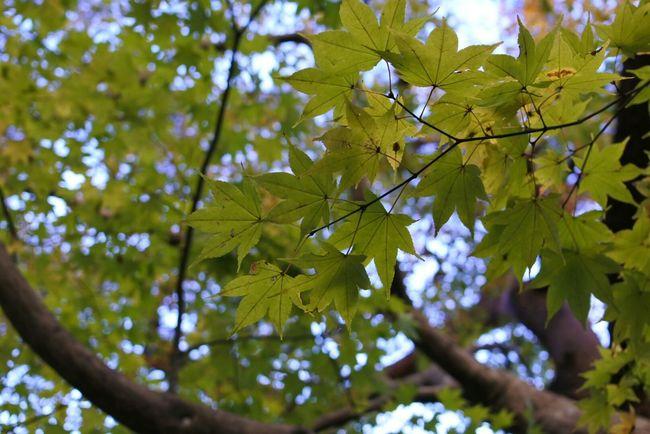 秋 Autamn 紅葉