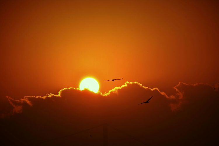 Low Angle View Of Silhouette Birds Flying Against Sky During Sunrise