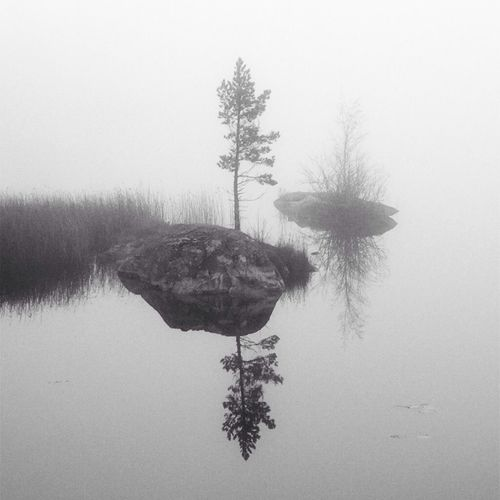 Foggy days Fog Over Water Tree_collection  Calmwater Bw_trees