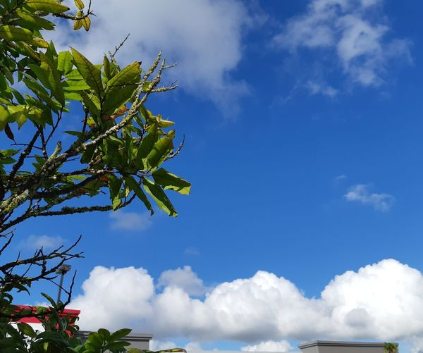 Hello Monday Monday Blues New Zealand 🇳🇿 Autumn Day Buildings Today's View 19°C Tree Blue Sky Cloud - Sky Tree Area Treetop Cumulus Cloud Leaf Vein Leaves Plant Life Growing Fluffy Stratosphere Heaven