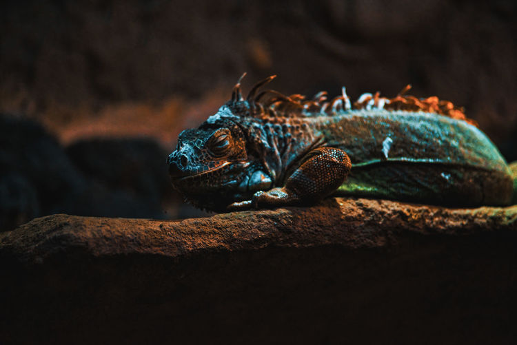 Beauty In Nature You And Me Seite An Seite Colors Zoology Zoo Reptile Indoors  Relaxing EyeEm Best Shots Enjoying Life No People UnderSea Sea Life Crocodile Iguana Dragon Animal Scale Animal Skin