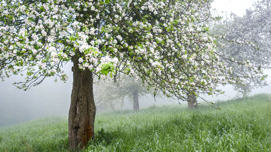 EyeEmNewHere Beauty In Nature Blossom Branch Day Flower Fragility Freshness Grass Growth Landscape Nature No People Outdoors Scenics Sky Springtime Tranquil Scene Tranquility Tree Tree Trunk