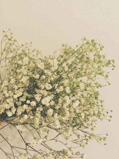 Flowers White Gypsophila Babysbreath