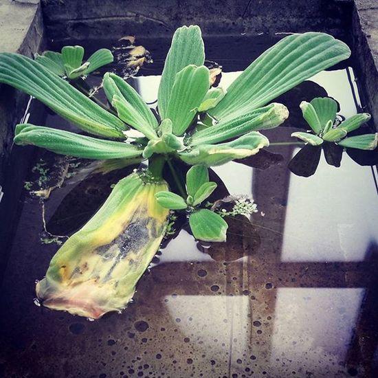 Plants Waterplants Scorched