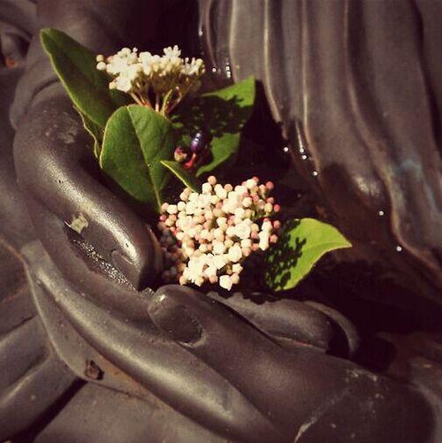 Buddha's Hands Buddha Statue Sculpture Plants Flowers