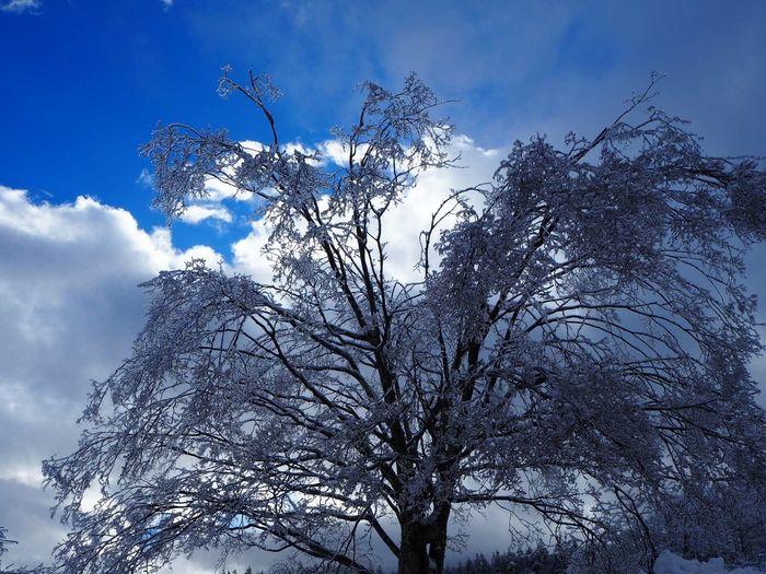 2/2の空 My Sky 冬空 八ヶ岳山麓 冬の景色 EyeEm Nature Lover Nature 信州 雨氷 木 Tree Nagano, Japan 今日の空
