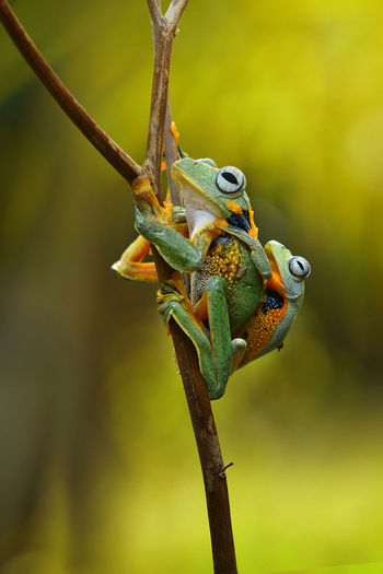 Animal Animal Eye Animal Head  Animal Themes Animal Wildlife Animals In The Wild Branch Close-up Day Focus On Foreground Green Color Lizard Nature No People One Animal Outdoors Plant Plant Stem Reptile Tree Twig Vertebrate