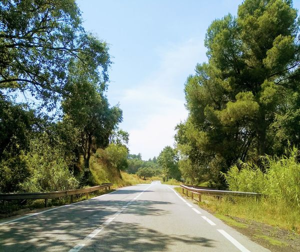 The Road Driving Car Interior Cars Road Roadtrip Roadtrip Tree Road Sky Landscape Car Point Of View Road Marking Empty Road Mountain Road Winding Road vanishing point Diminishing Perspective Treelined Double Yellow Line Asphalt
