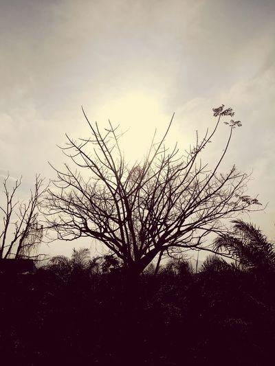 Dry season,fall. Branch Bare Tree