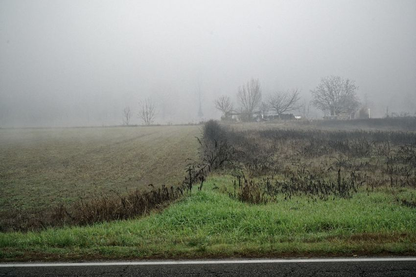 Field Foggy Weather Grass Landscape_Collection Misty Nature Tree Background Backgrounds Fields Fog Fog_collection Foggy Foggy Day Foggy Landscape Foggy Morning Full Frame Hill Landscape Landscape_photography Mist Misty Morning Misty Mornings Wallpaper Wallpapers