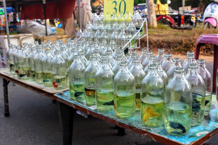 Fishes in bottles with water on table at market