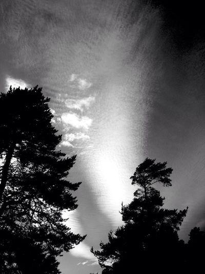 Summer in black & white Taking Photos
