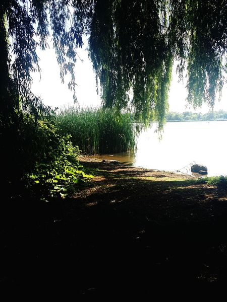 Summer by the bay Relaxing Summertime Waterfront Water Landscape Willow Tree First Eyeem Photo