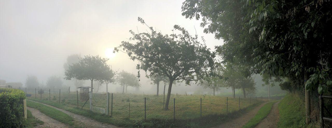 Fog Plant Tree