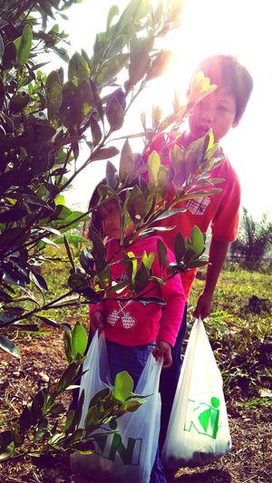 fruit picking ..