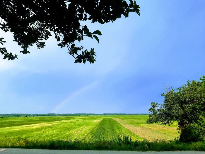 Everything green.... Tree Rural Scene Irrigation Equipment Cereal Plant Rice Paddy Agriculture Field Crop  Springtime Farm Single Tree Growing Plantation Agricultural Field Cultivated Land Organic Farm