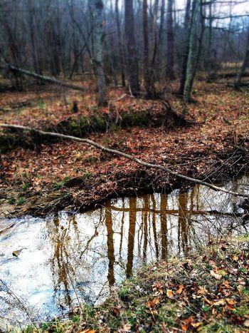 Enjoying Life Beautiful Day Nature So Many Memories Water Reflections Water