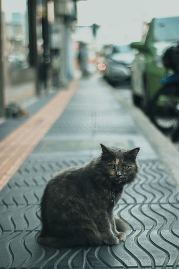 Cat sitting on street in city