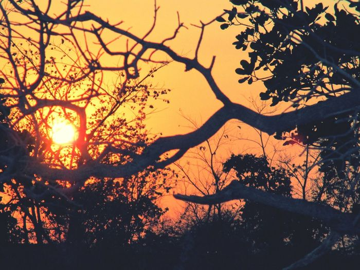 Sunset #sun #clouds #skylovers Sky Nature Beautifulinnature Naturalbeauty Photography Landscape [a:12174900] Sun Pastel Power Shadow Trees @sekharchinta , Hyderabad India