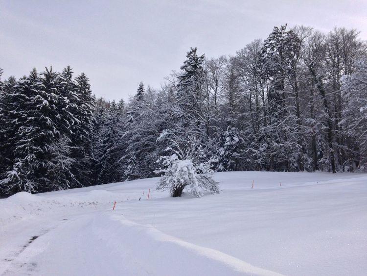 Winter Snowing Neige❄