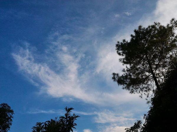 Blue sky with tree Blue Sky Sky Panorama Tree Tree Blue Sky Cloud - Sky