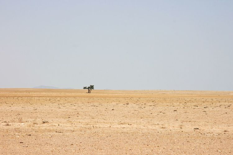 Single tree in desolate landscape of sand and desert in solitaire, nambia.