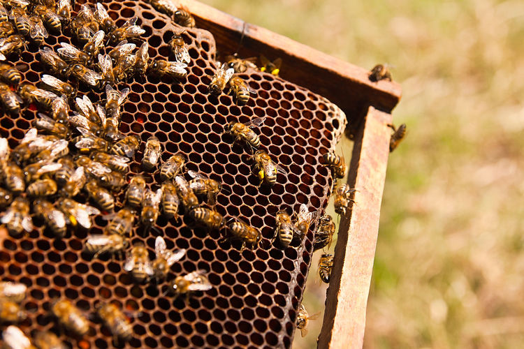 Animal Themes APIculture Beehive Animals In The Wild Animal Bee Group Of Animals Animal Wildlife Invertebrate Large Group Of Animals Honeycomb Insect Close-up Nature Honey Bee No People Day Food Beauty In Nature Sunlight Outdoors