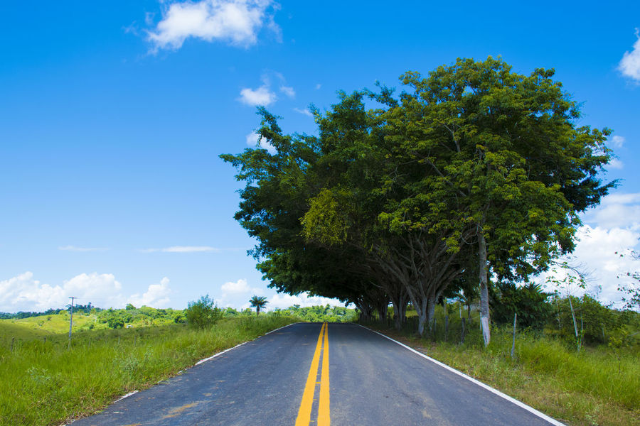 Beautiful Road Blue Sky Cloud - Sky Direction Environment Landscape Nature No People One Line One Rose Outdoors Plant Road Road Forward Road Marking Sign Sky The Way Forward Tree