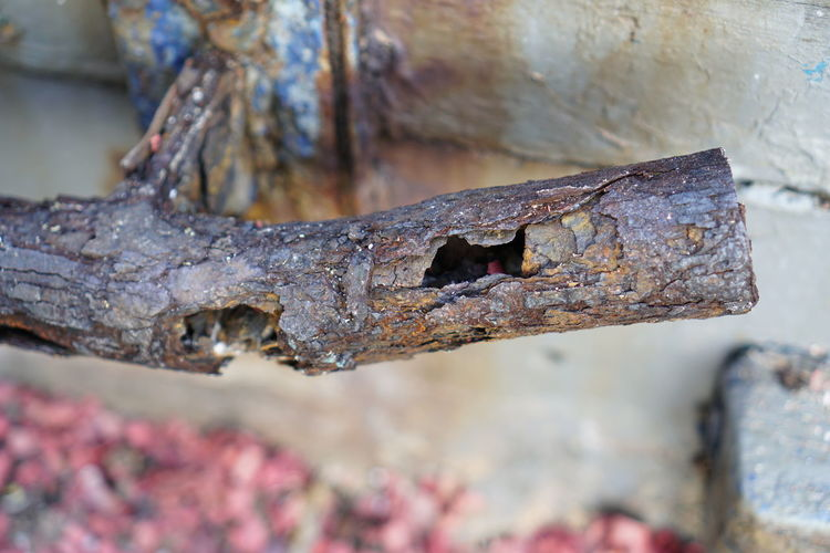 Rust Rusted
