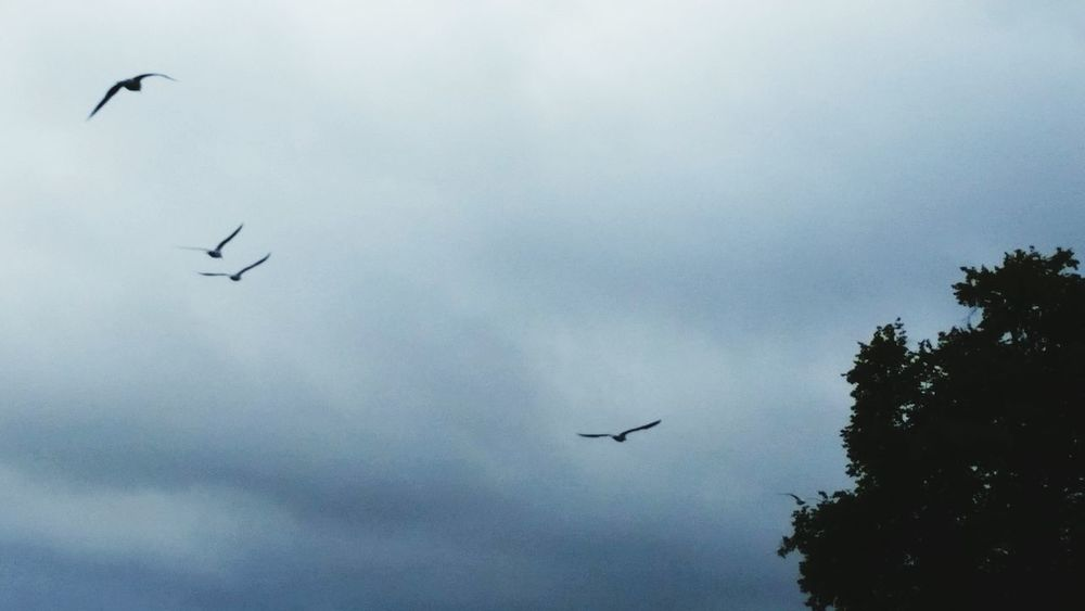 Shades Of Grey in the sky Birds In Flight Looking For Freedom from the storm Getting Creative EyeEm Nature Lover EyeEm Gallery Cloudy Day Miserable Weather Capture The Moment