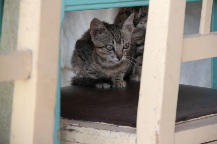 Animal Themes Cat Close-up Day Domestic Animals Domestic Cat Feline Hidden Kittens Kitty Cat Mammal No People Pets